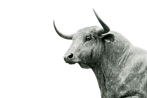 Grey bull 14